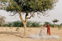 ashes under Khejeri tree, Rajasthan