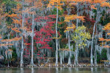 The Big Cypress Bayou
