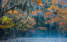 Silent Morning in the Cypress Swamp