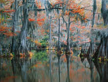 The Secret Cypress Swamp