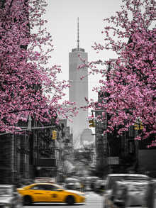 New York in Spring